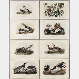 Audubon, John James (1785-1851) Seven Octavo Plates from The Birds of America  , Second Edition.