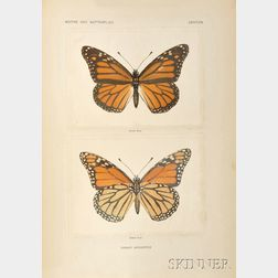 Denton, Sherman F. (fl. circa 1900) Moths and Butterflies of the United States