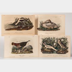 Audubon, John James (1785-1851) Seven Octavo Ornithological Chromolithographic Plates.