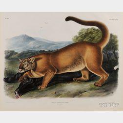Audubon, John Woodhouse (1812-1861)