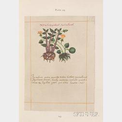(Codex)
