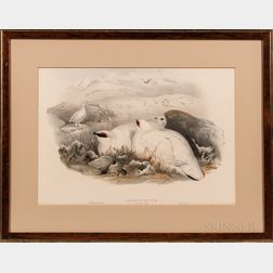Gould, John (1804-1881) and Henry Constantine Richter (1821-1902) Two Ptarmigan Prints: Lagopus Mutus.