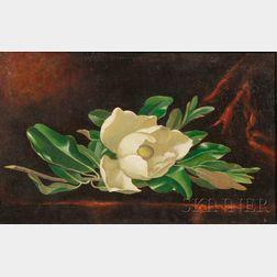 After Martin Johnson Heade (American, 1819-1904)      Magnolia