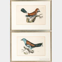Two Framed R. Milford Hand-colored Book Plates of a Roller and a Jay