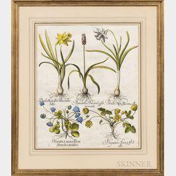 Basilius Besler (German, 1561-1629)      Two Botanical Engravings with Hand-coloring: Lilium montanum flore