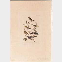 Audubon, John James (1785-1851) Little Tyrant Flycatcher, Small-headed Flycatcher, Blue Mountain Warbler, Bartrams Vireo, Short-legged