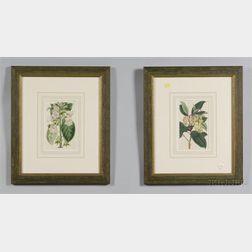 Six Framed Hand Colored Botanical Book Plates