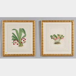 Four Framed Hand Colored Orchid Book Plates