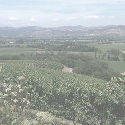 Clos du Mont Olivet