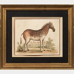 Two Framed Antique Prints:, George Edwards (British,1694-1773), Zebra femina...Drawn from the living Animal belonging to His Royal High