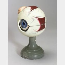 Composition Model of the Eye