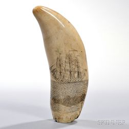 Large Scrimshaw-decorated Whale's Tooth