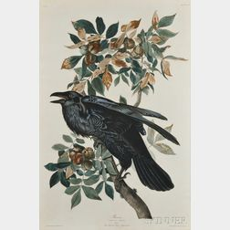 Audubon, John James (1785-1851) Raven, Male