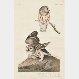 Audubon, John James (1785-1851) Little Owl, Northern Saw-whet Owl  , Plate CXCIX.
