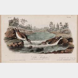 Audubon, John James (1785-1851) Little Sandpiper,   Plate 337, Octavo.