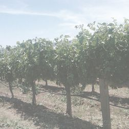 Avignonesi Vino Nobile di Montepulciano Riserva Grandi Annate 1999, 1 magnum