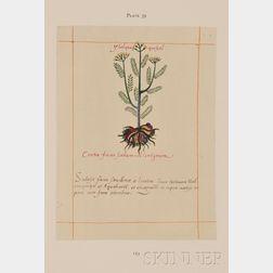 (Herbal, Aztec Codex), Codex Barbarini