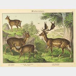 Six Lithographs of North American Mammals