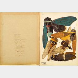 Emile A. Seguy (French, 20th Century)    INSECTES