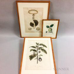Three Framed Botanical Engravings