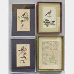 Ornithological and Botanical Prints, 19th Century, Four Framed.