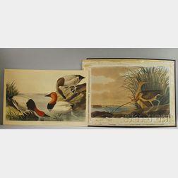 Two Audubon Elephant Folio-size Collotypes
