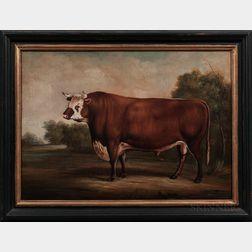 American School, 20th Century      Portrait of a Bull