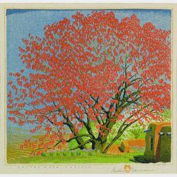 Gustave Baumann (German/American, 1881-1971)    Cotton Wood Tassels