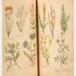(British Herbal)