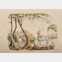 Harris, William Cornwallis, Sr., Portraits of the Game and Wild Animals of Southern Africa, Delineated from Life in their Native Haunts