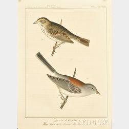 Twenty-three Hand-colored Ornithological Bookplates