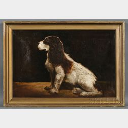 American School, 19th Century      Portrait of a Springer Spaniel.