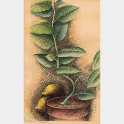 Luigi Rist (American, 1888-1959)      Ida's Lemon Tree