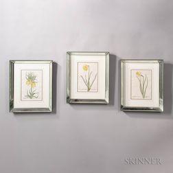 Suite of Six Botanical Prints