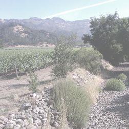 Chateau Montelena Saint Vincent Napa Valley Red Wine The Montelena Estate 1994
