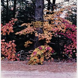 William Wegman (American, b. 1943)      October 1981, Rangeley, Maine