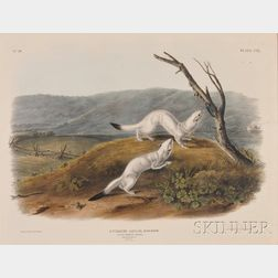 Audubon, John Woodhouse (1819-1862)
