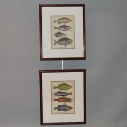 Pair of Plates Depicting Fish from Histoire Naturelle