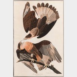 Audubon, John James (1785-1851) Brasilian Caracara Eagle  , Plate CLXI.