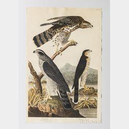 Audubon, John James (1785-1851) Goshawk, Stanley Hawk  , Plate CXLI.