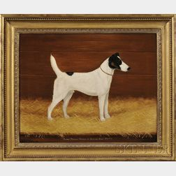 "Anglo/American School, Early 20th Century      Portrait of the Smooth Fox Terrier ""Albany Warrant Winner of Several First Prizes."""