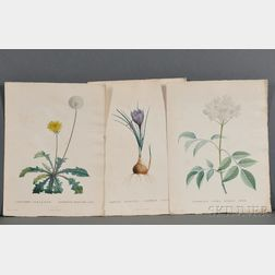 Redouté, Pierre Joseph (1759-1840) Three Hand-colored Botanical Prints.