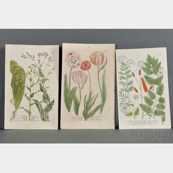 Weinmann, Johann Wilhelm (1683-1741) Ten Hand-colored Botanical Illustrations