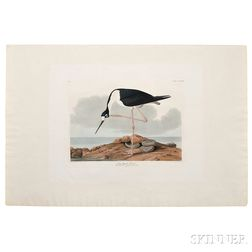 Audubon, John James (1785-1851) Long-legged Avocet,   Plate CCCXXVIII.