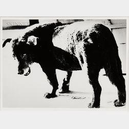 Daido Moriyama (Japanese, b. 1938)      Stray Dog, Misawa