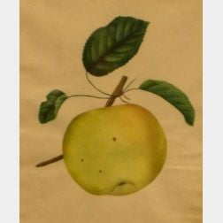 Framed Watercolor of an Apple.