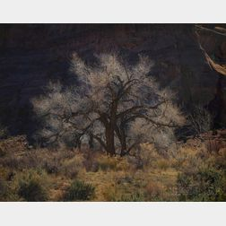 Christopher Burkett (American, b. 1951)      Cottonwood and Sunlight, Canyonlands, Utah
