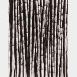 Tina Modotti (Italian, 1896-1942)      Sugar Cane