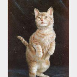 American School, 20th Century  Begging/An Orange Tabby Cat