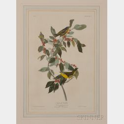 Audubon, John James (1785-1851) Nashville Warbler  , Plate LXXXIX.